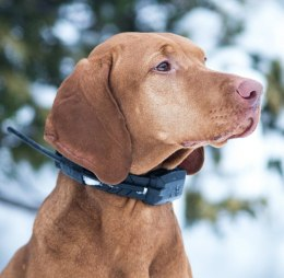 DOGtrace GPS X20 Additional Collar